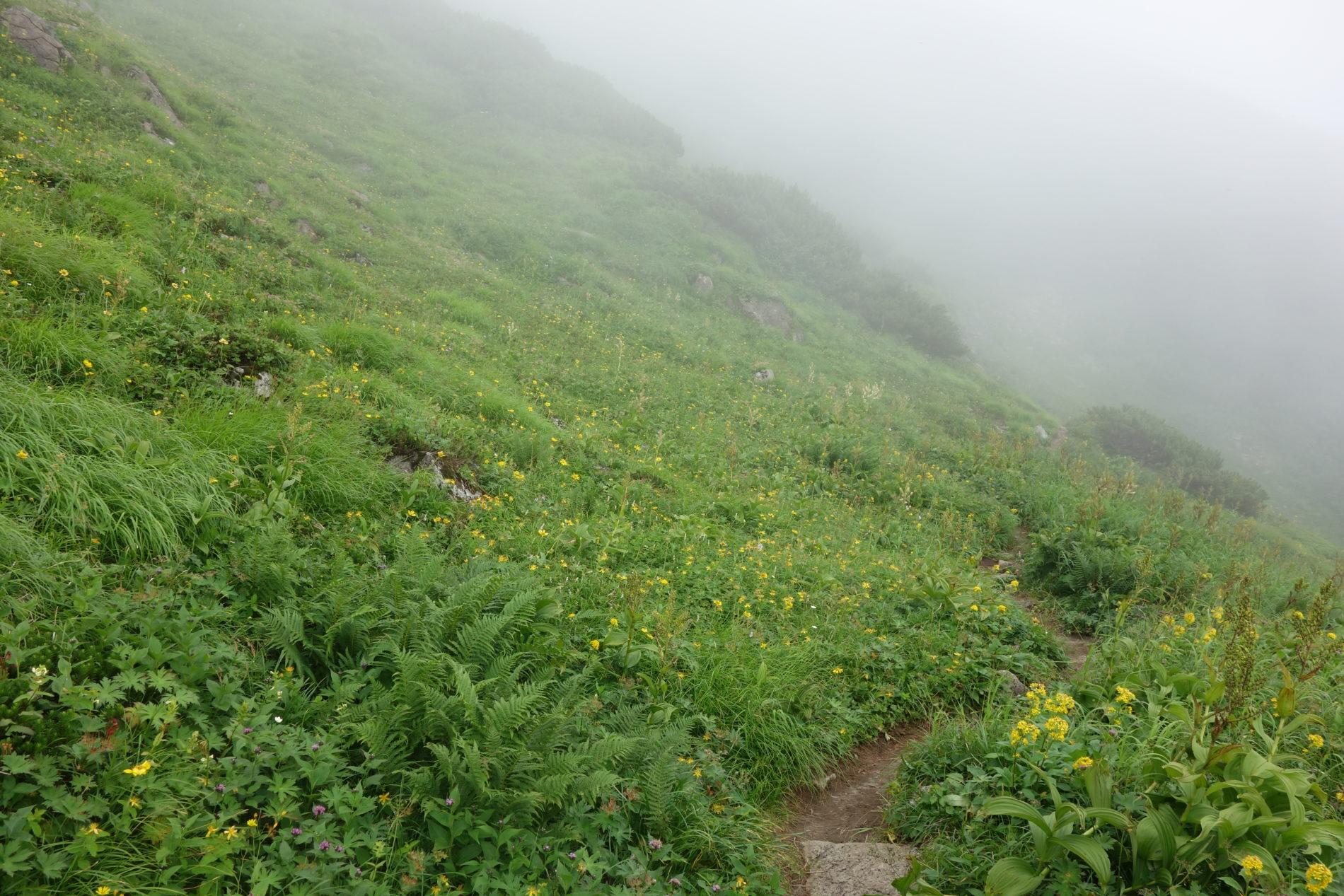 幌尻岳 幌尻岳山頂〜下山
