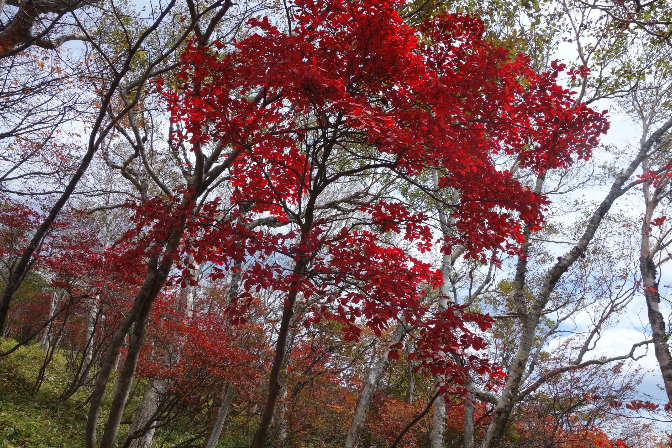 赤城山 陣笠山〜黒檜山