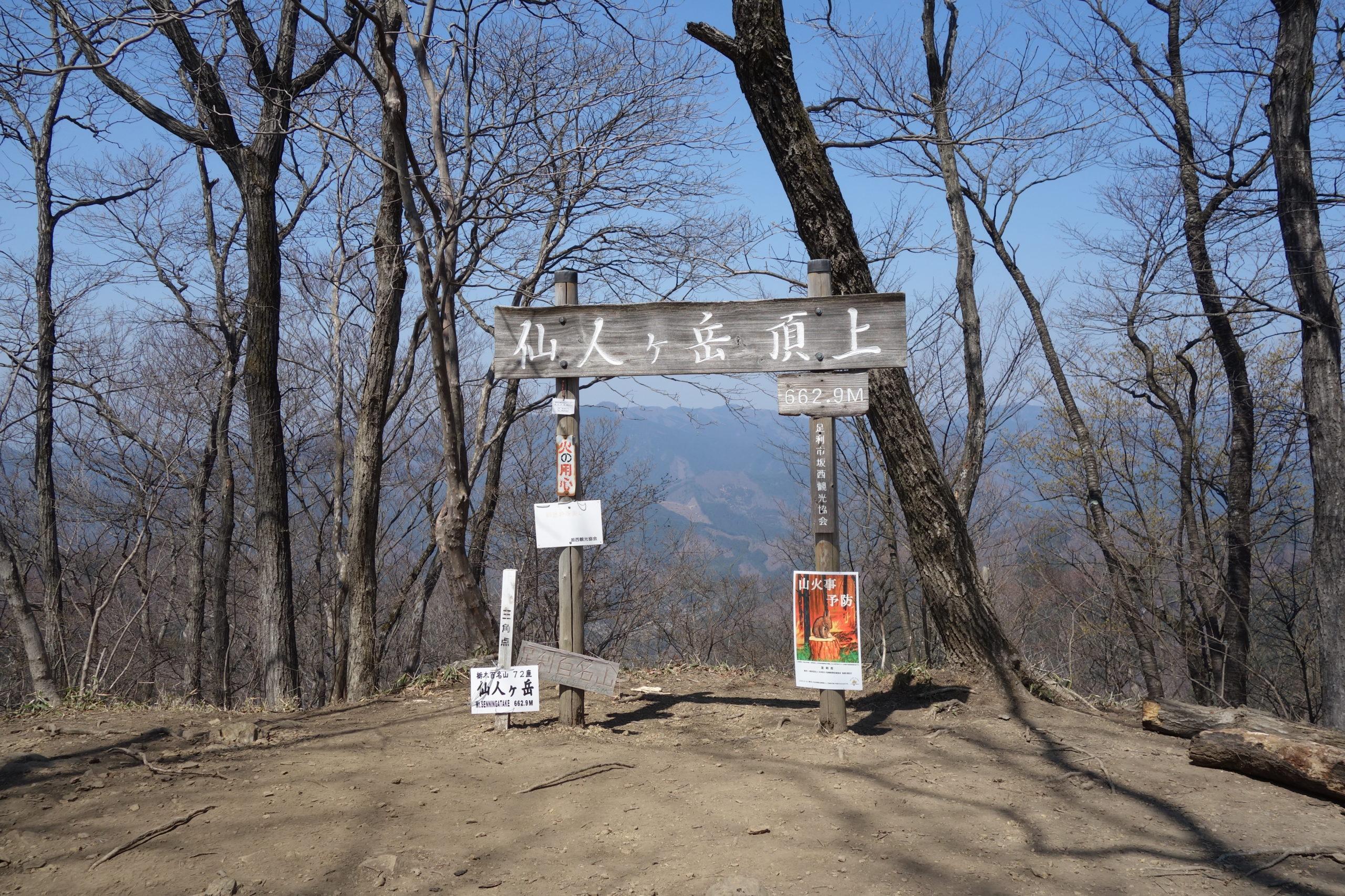 仙人ヶ岳 熊の分岐〜仙人ヶ岳山頂