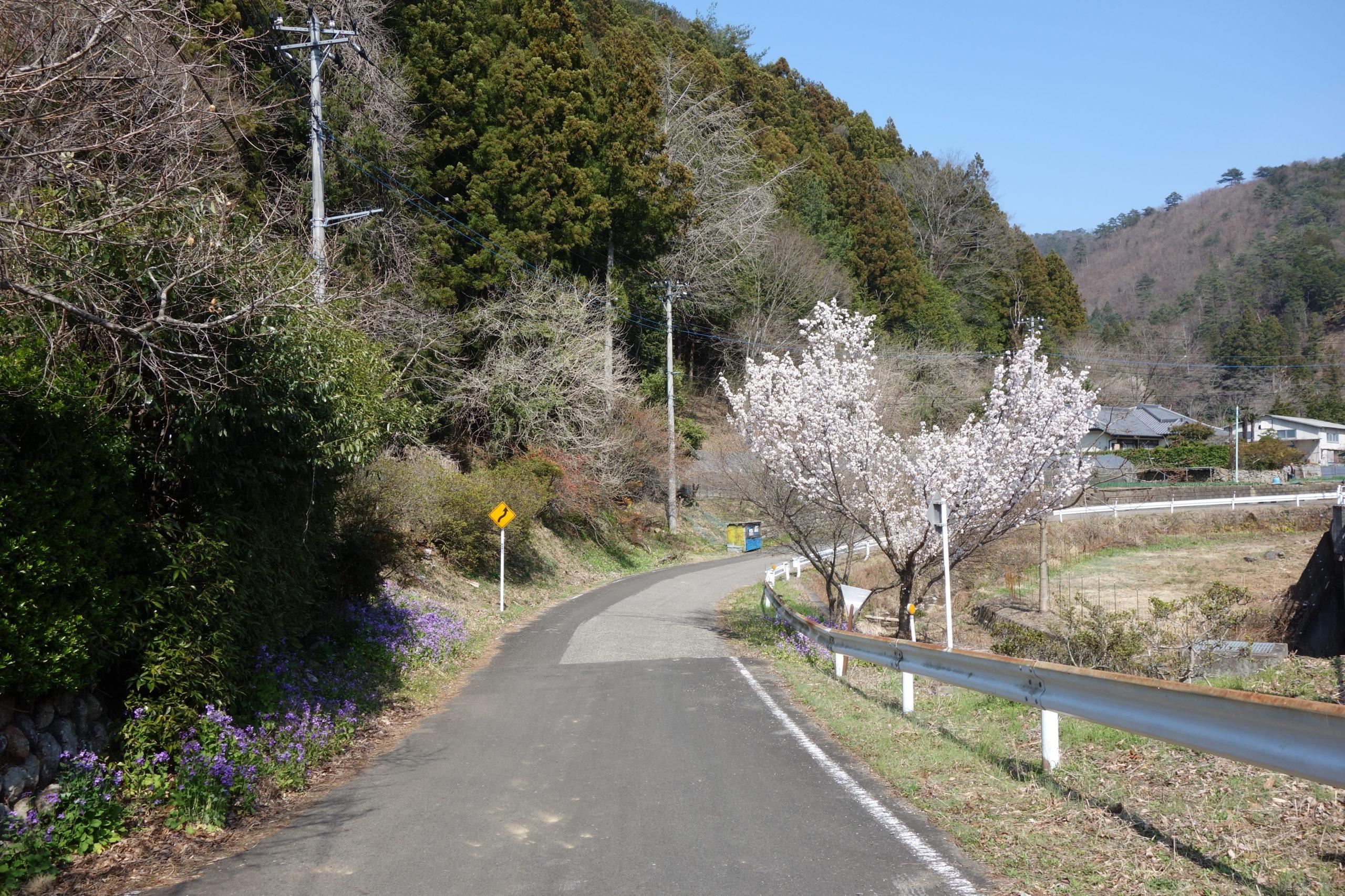 仙人ヶ岳 維ノ岳〜猪子山〜下山